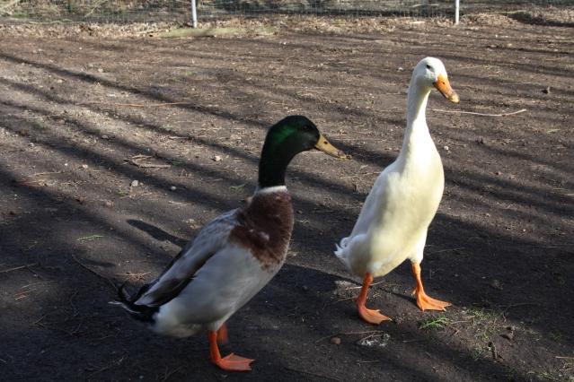 Ferdinand en Kowalski